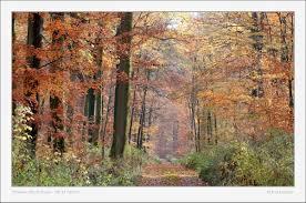 Automne Vosges